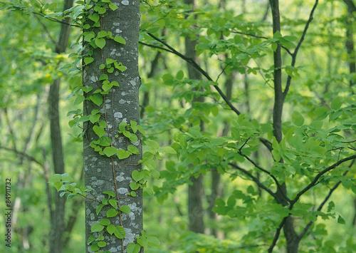 Montage in der Fensternische Grun Green Leaves forest Landscape
