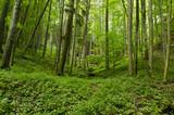 Zielony las z doliną