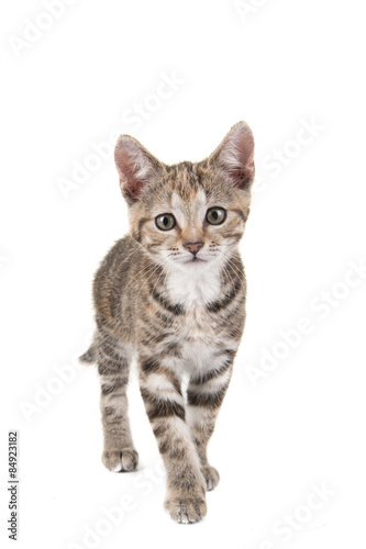 Photo Stands Cat Cypers kitten, jonge kat, komt naar de camera gelopen, tegen een witte achtergrond