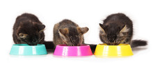 Kätzchen Fressen Aus Näpfen Isoliert