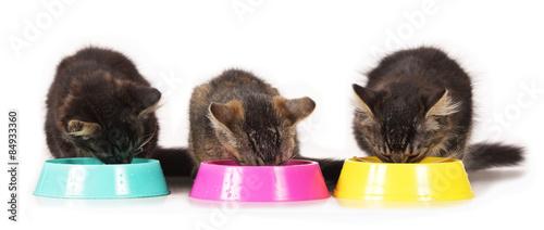Fotografie, Obraz  Kätzchen fressen aus Näpfen isoliert