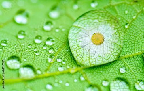 Fotobehang Natuur daisy drop