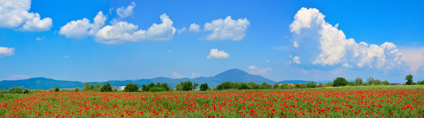 Obraz na Szkle Beautiful panorama of a poppy field