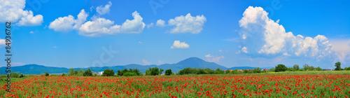 Beautiful panorama of a poppy field - 84936762