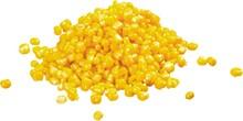 Corn, Sweetcorn, Isolated.