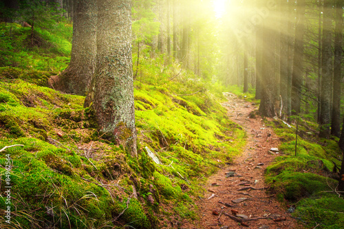 Landscape dense mountain forest in sunlight.