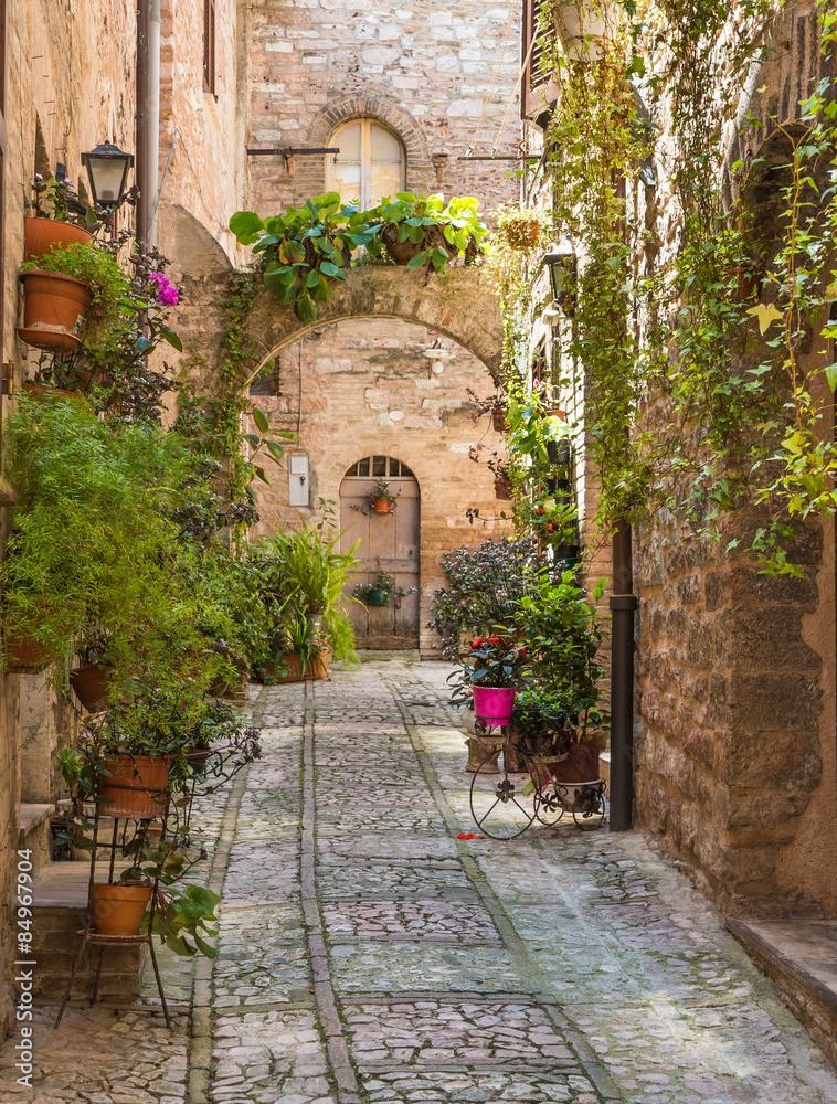 Fototapety, obrazy: Aleja z kwiatami, Spello, Włochy