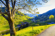 Scenic panorama with sunset in hilly summer valley in Germany, Muenstertal, Schwarzwald