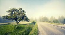 Rural Road In Morning Fog