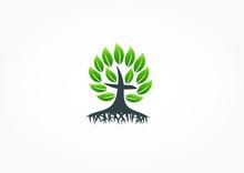 Tree Root Christian