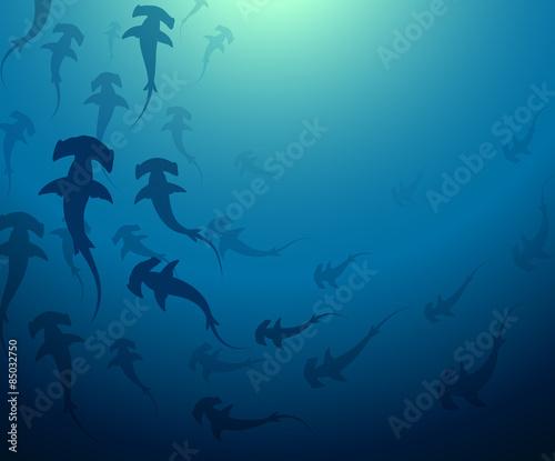 Fotografía hammerhead shark school