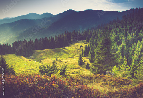 Beautiful summer mountain landscape at sunshine. Poster