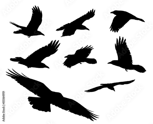 Papiers peints Oiseau Eight black crows ravens flying above with an isolated white background for clip art.