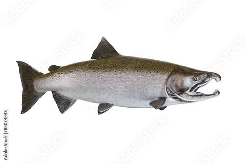 Fotografie, Obraz  Velký losos na bílém pozadí