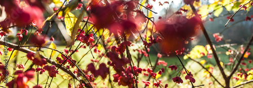 Tree with red flowers #85081714
