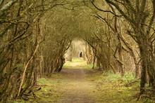 Tunnel D'arbres