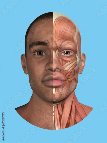 Anatomy Split Front View Of Face And Major Facial Muscles Of A Man