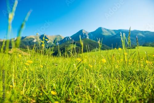 Fotografie, Obraz  Mountains Summer Meadow