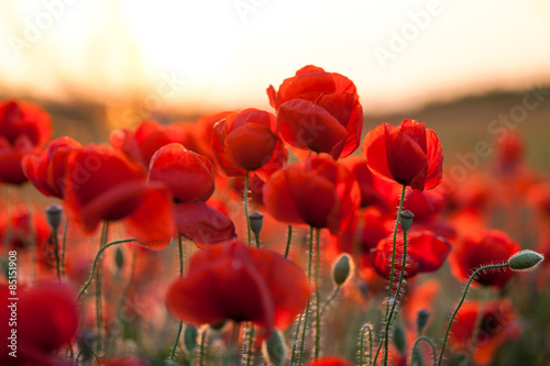 Cadres-photo bureau Poppy feuriger Mohn