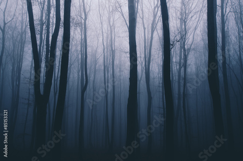 Foto spooky forest night