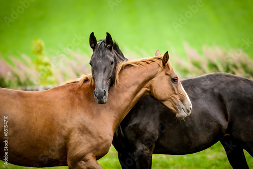 Photo  Two horses embracing.