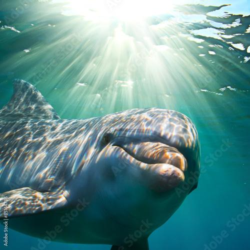 Plakat Delfin podwodny z promieniami słońca. Portret zbliżenie