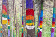 El bosque de Oma, Reserva de la Biosfera de Urdaibai, Bizkaia (España)