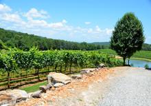 Vineyards Of North Georgia, USA