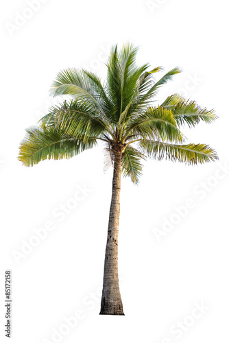 In de dag Palm boom coconut tree on isolated