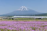 新幹線と富士山とお花畑 快晴青空