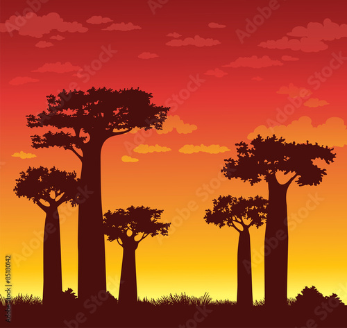Deurstickers Bruin Baobabs and sunset. Madagascar.