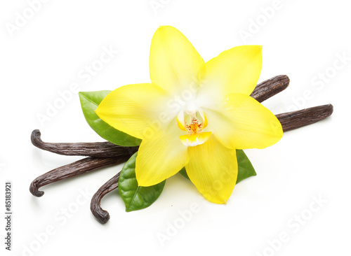 Cuadros en Lienzo Vanilla pods and orchid flower isolated