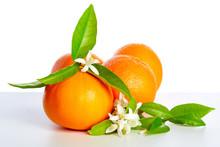 Oranges With Orange Blossom Flowers On White