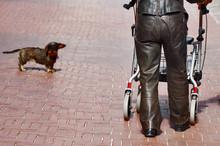 Mühsamer Spaziergang - Frau Mit Rollator Und Hund In Der Stadt