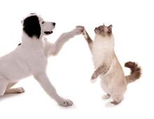 Hund Und Katze High Five