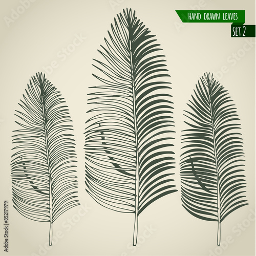 Set of hand drawn palm leaves Wall mural