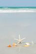 Beautiful starfish with sea