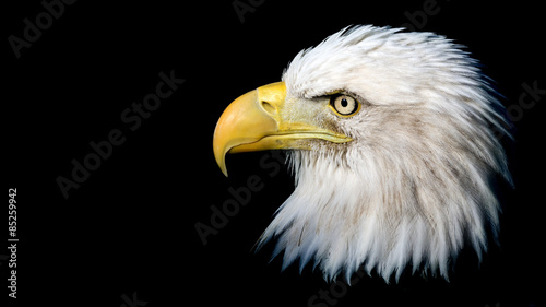 Fotobehang Eagle Portrait of an American bald eagle against a black background with room for text