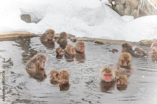 Foto op Plexiglas Aap 思い思いの温泉のおさる達 Monkeys snow-see viewing hot spring