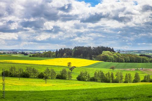 Рапсовые поля Германии