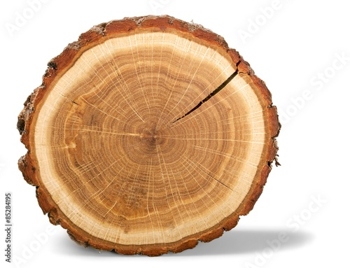 Fotografia  Tree Ring, Log, Wood.