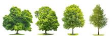 Set Of Green Trees Maple, Birc...