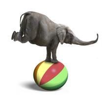 Elephant Balancing On A Colorf...
