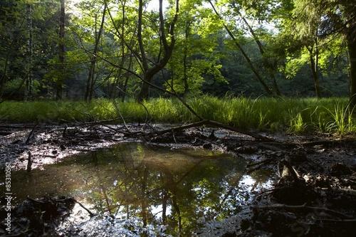 Valokuva  Palude, aquitrinio, alberi,