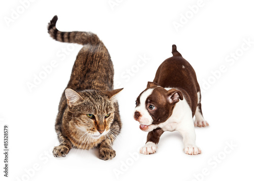 Fotografie, Obraz  Adult Cat Annoyed With Playful Puppy