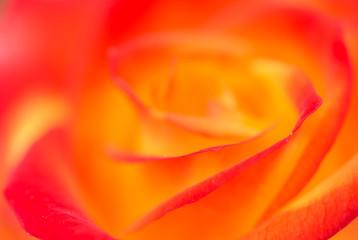 Obraz na Szkle Róże Rosige Aussichten