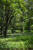 Zielony las w promieniach wiosennego słońca
