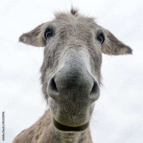 Keuken foto achterwand Ezel close up face of a donkey