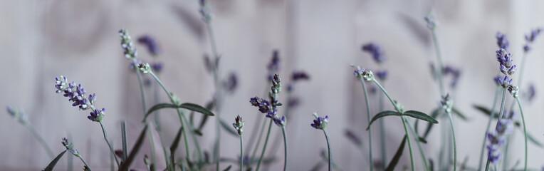 Panel Szklany Lavendel