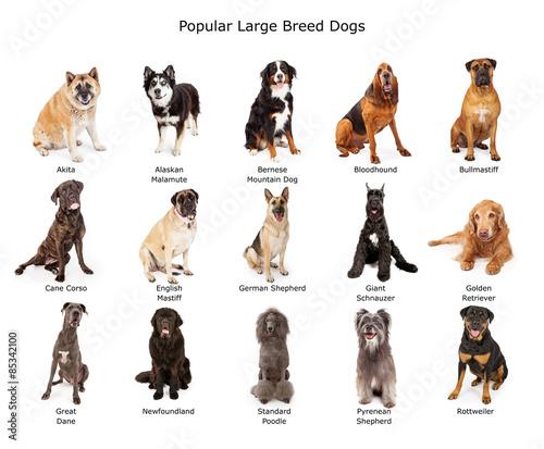 Collection of Popular Large Breed Dogs Slika na platnu
